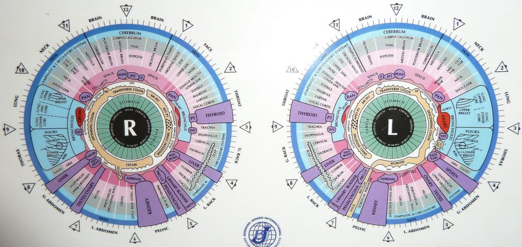 Intricate Iridology Chart