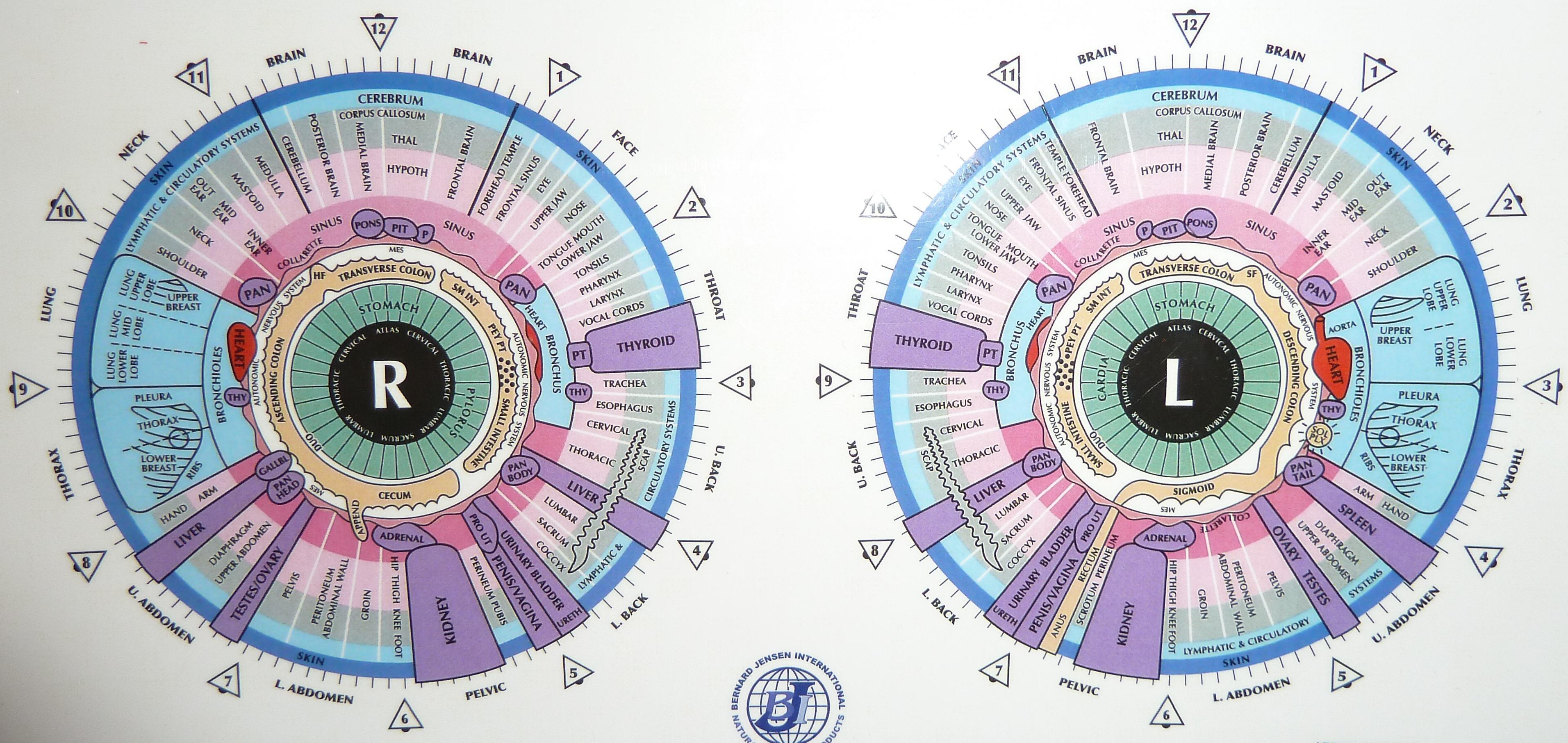 Iridology charts grapegate intricate iridology chart geenschuldenfo Gallery