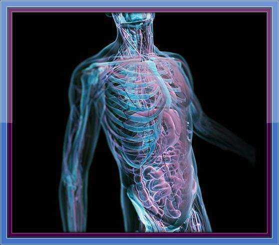 Your Amazing Biological Machine II