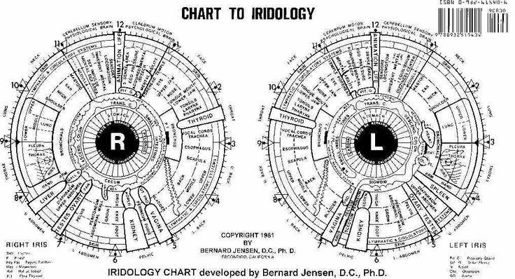 Bernard Jensen Iridology Chart